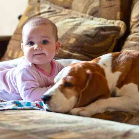 dog breeds for children