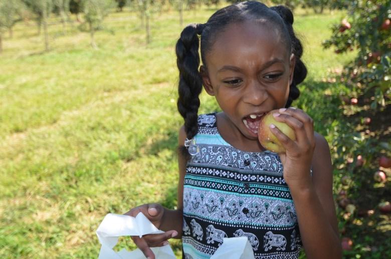 Apple Picking at Mercier Orchards