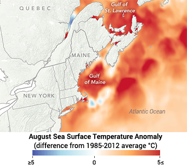 a map showing record high sea surface temperatures in the Gulf of Maine in August of 2018