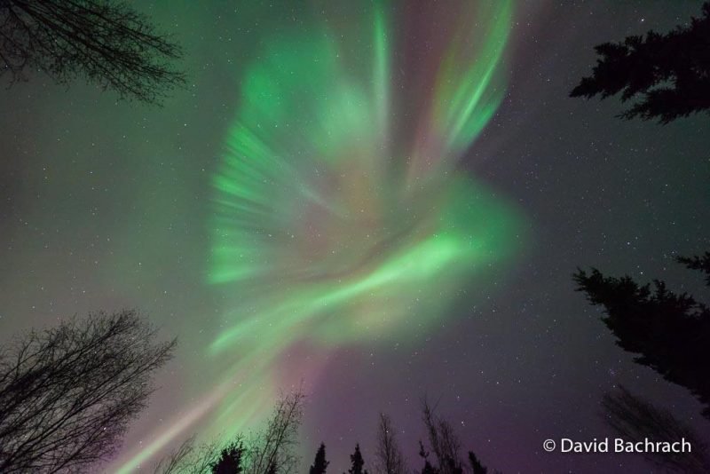 Auroras mostly radial, like an outspread wing, from an elongated body.
