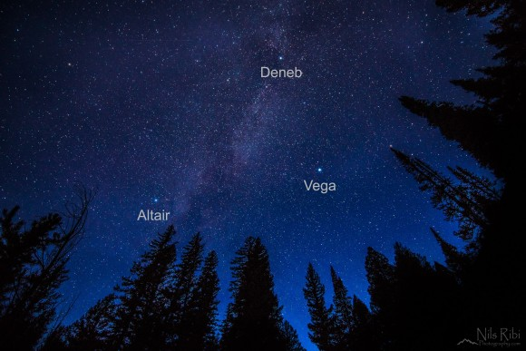 Summer Triangle high in sky, stars labeled, above pointy evergreen treetops.