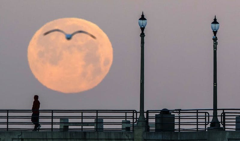 Big full moon with seagull silhouette.
