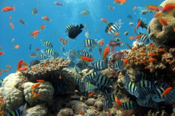 coral reef ecosystem