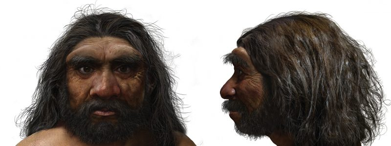 Front and side view of hairy bearded man with large brow ridges.