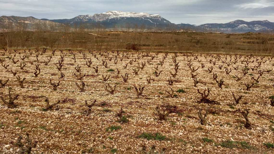 A vineyard looking toward Sierra de Cantabria