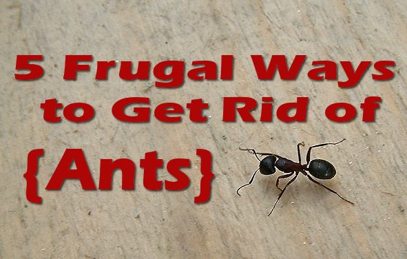 Get Rid Of Ants Naturally In Kitchen