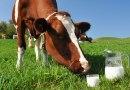 Kann Milch zum frühen Tod führen?