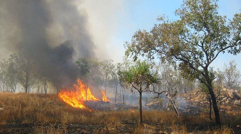Buschbrand in Australien außer Kontrolle