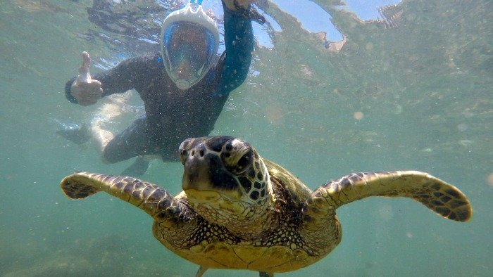 Our Hawaii Vacation on a Budget: Swimming with Turtles