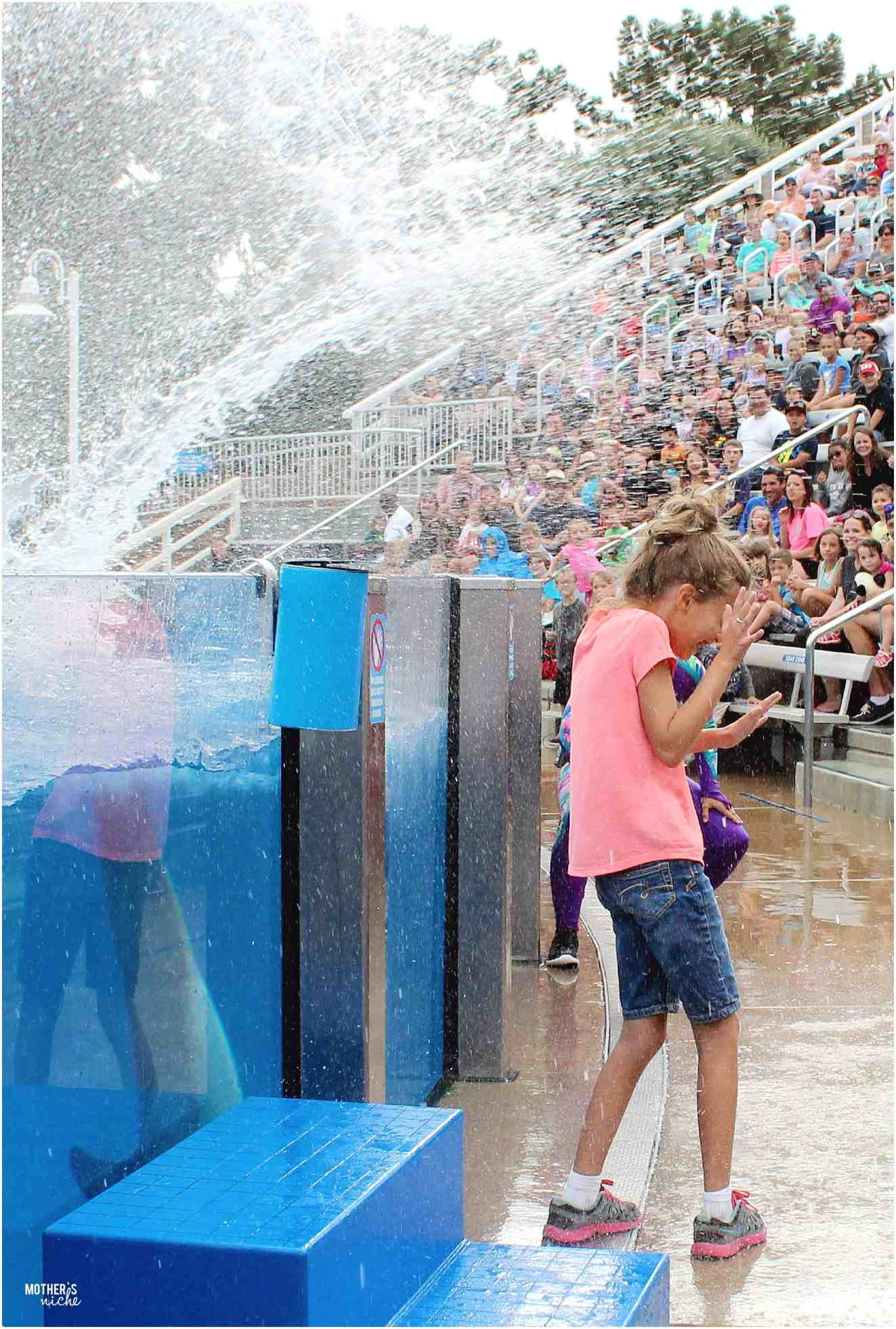 Splash zone- Sea World