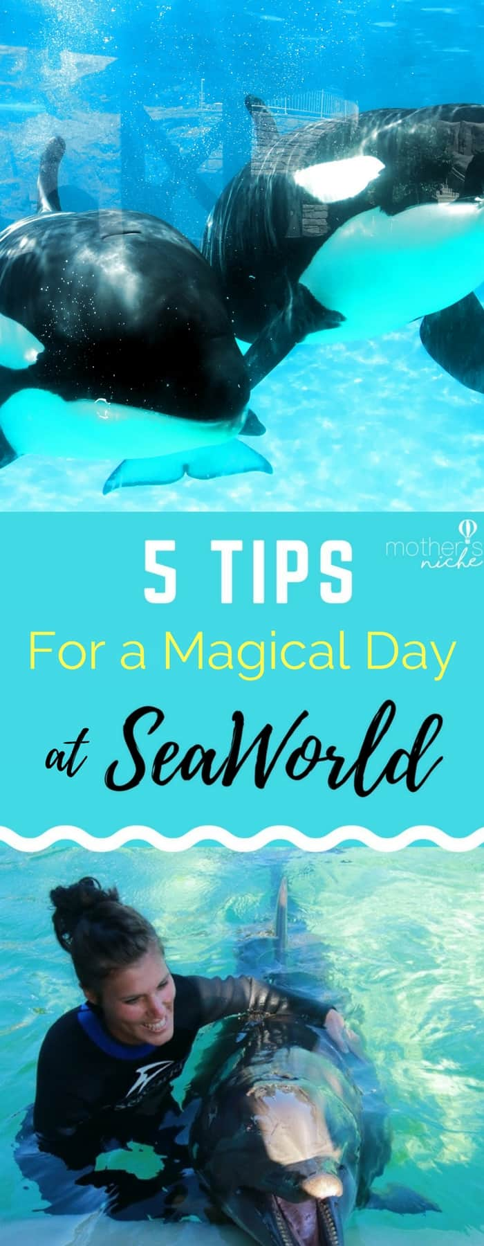Sea World Tips for the Perfect Day at Sea World