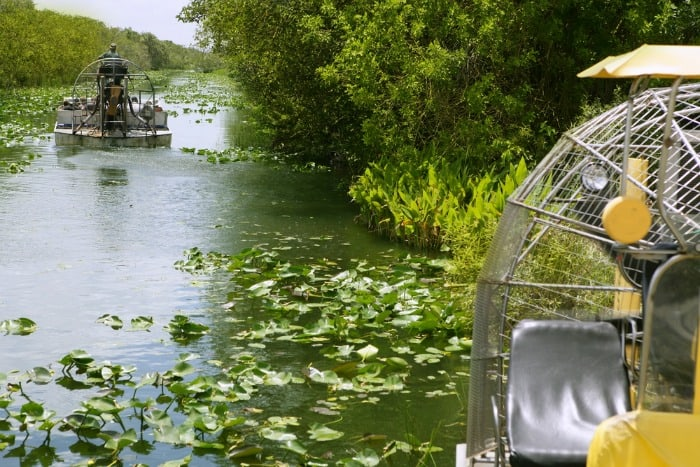 Fun Things to Do in South Florida Airboat tour in the Everglades and See Alligators