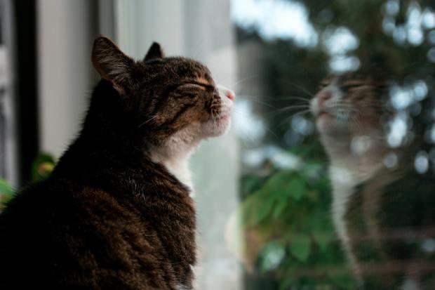 il gatto frncisco