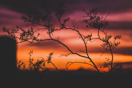 thin tree branches in front orange and pink sunset