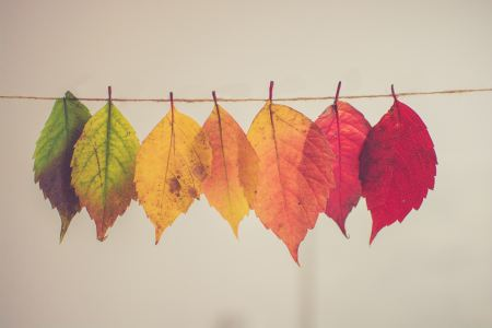 Seven autumn colored leaves hanging upside down on a piece of raffia