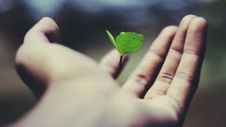 sapling in a hand