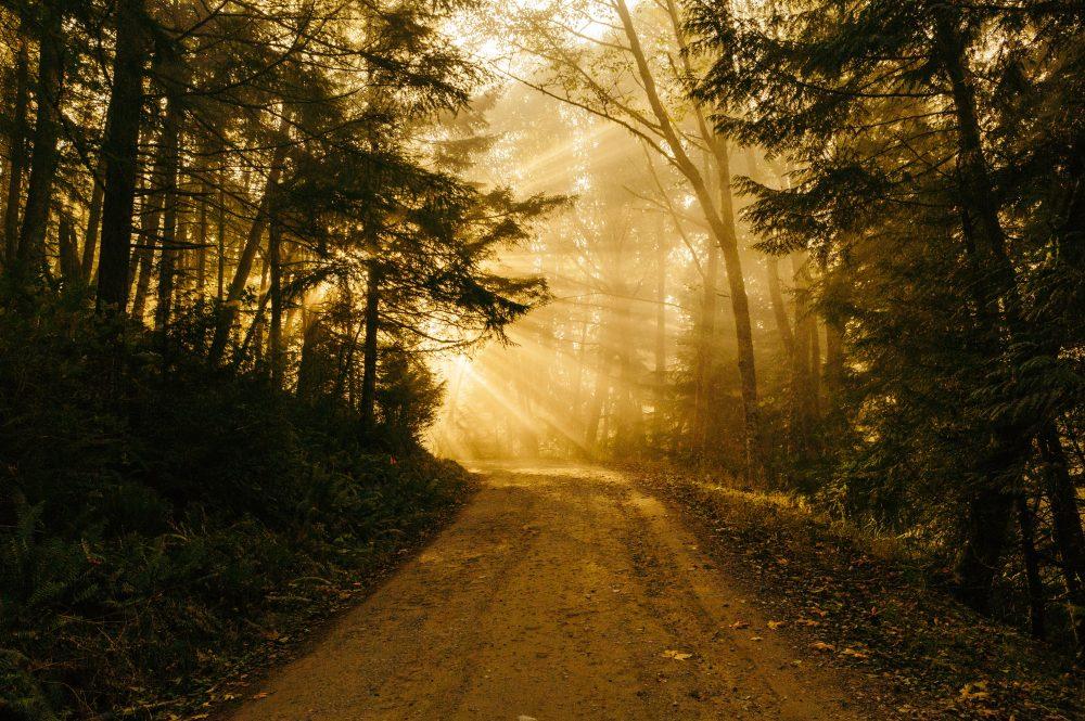 Chuckanut Mountain treed path