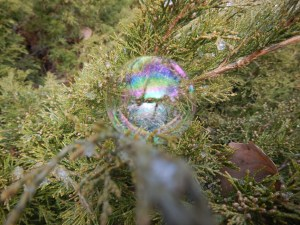 Bubble 3 on juniper