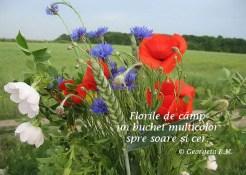 flori de camp-1