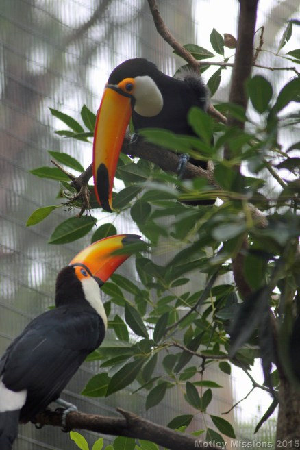 Toucans at Honolulu Zoo