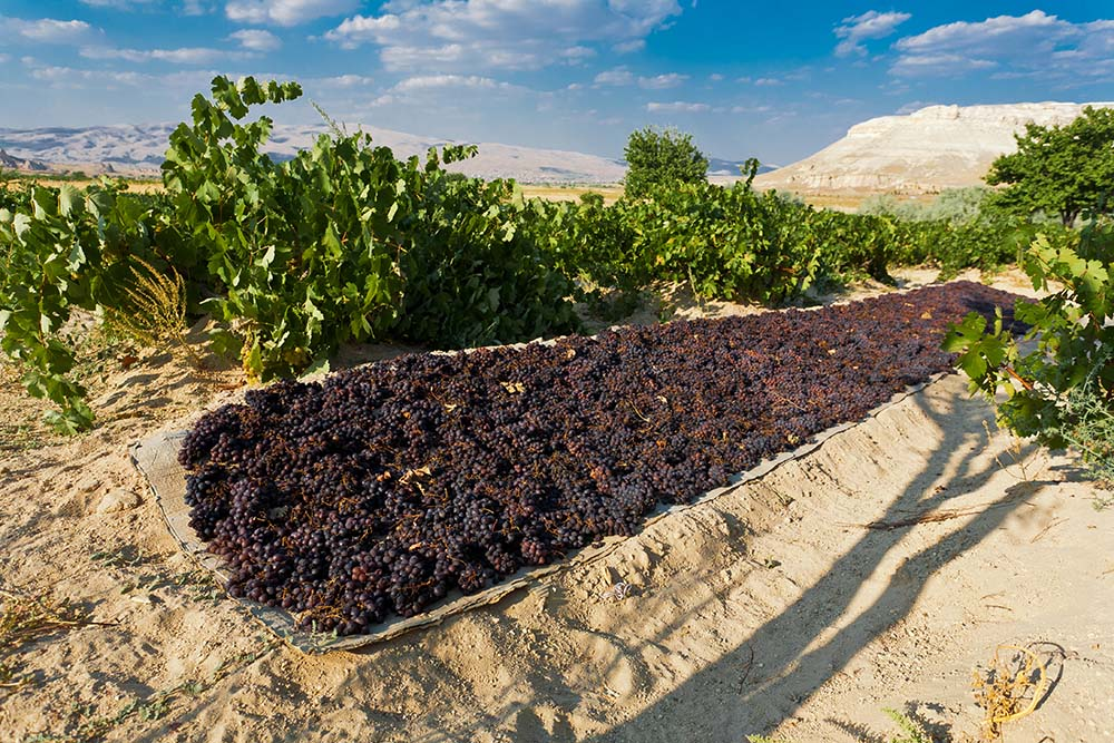 turkish viticulture