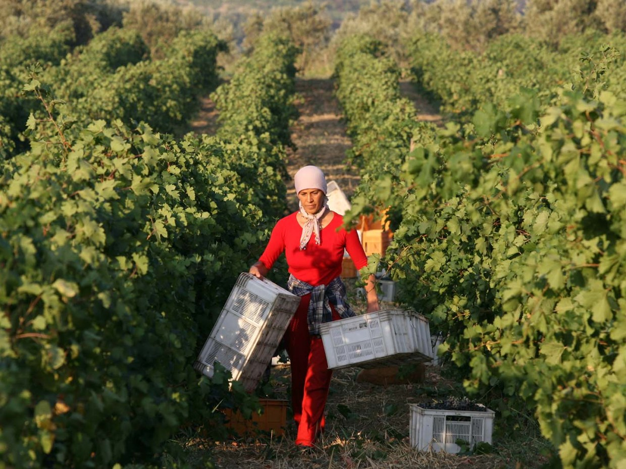 Red Route: Wine in Turkey