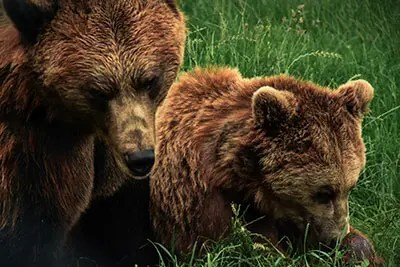 熊孩子(暴れ小熊)