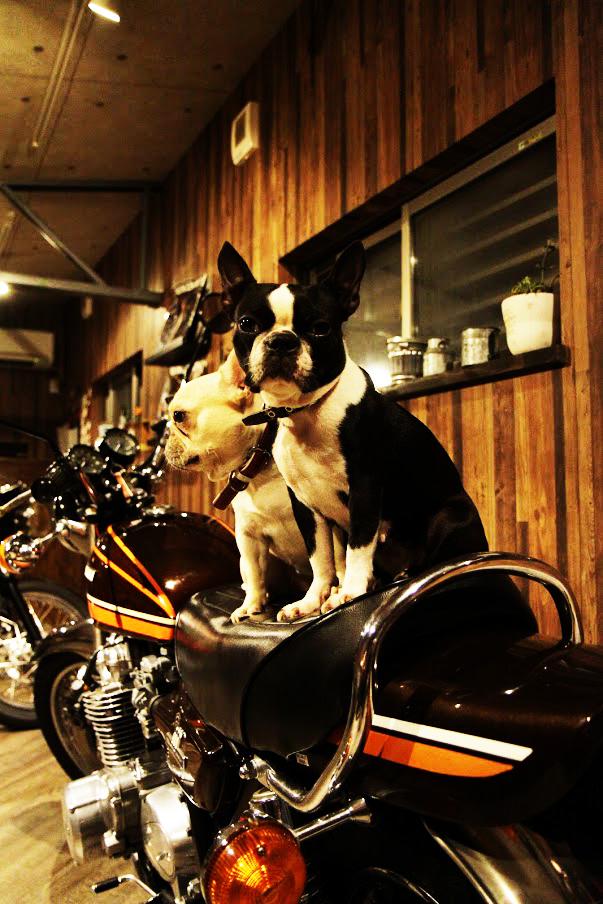 motobasedogs3