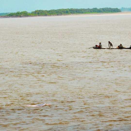 Розовый дельфин непрофессиональное фото