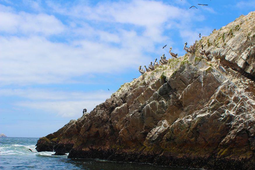 Пеликаны, чайки и крачки на скале в море