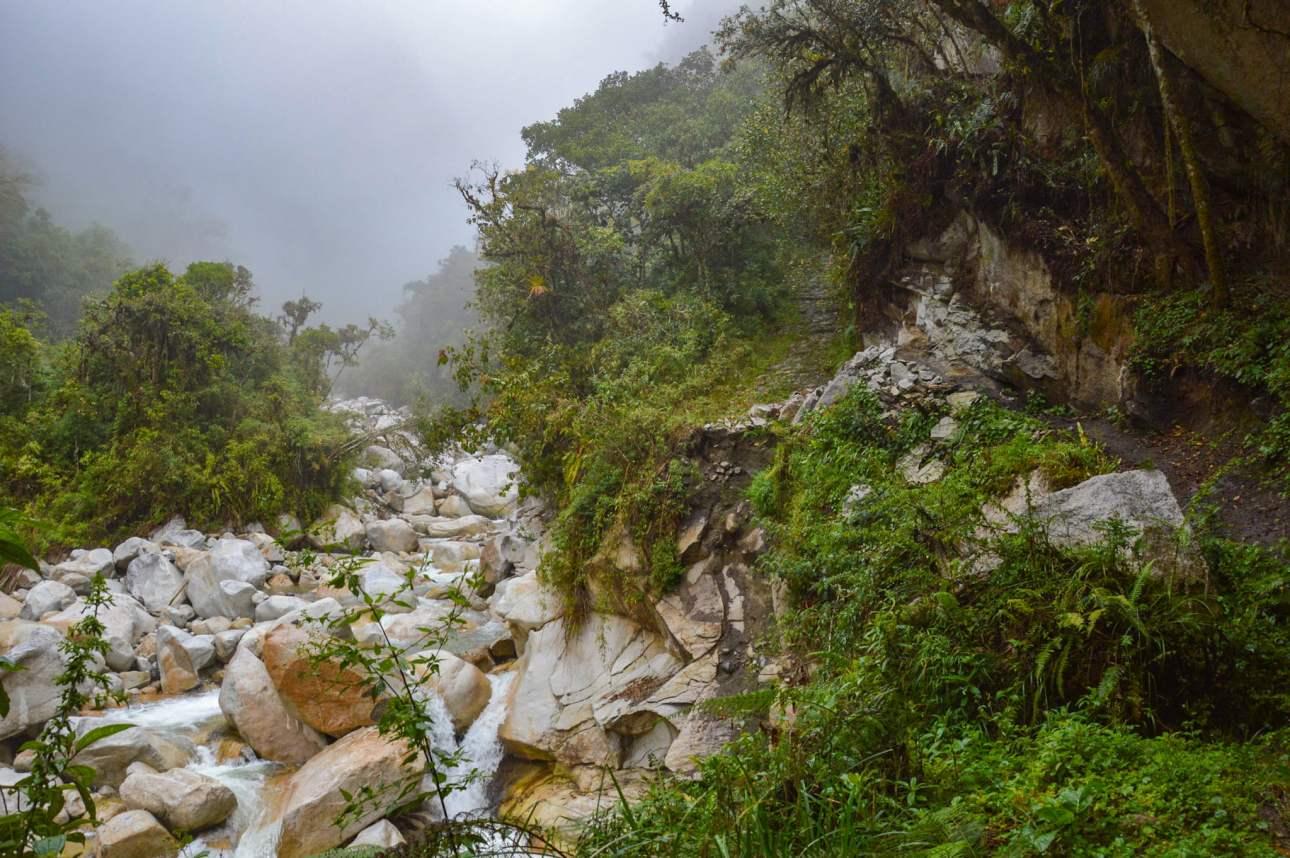 Река в джунглях