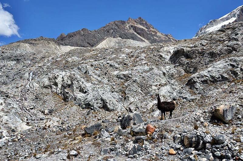 Лама в горах