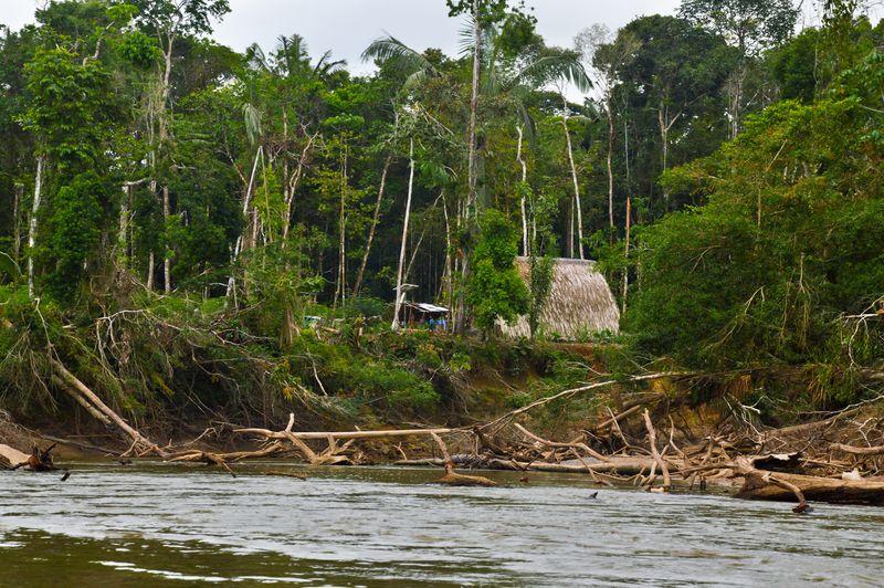 Традиционное жилище ваорани Эквадор