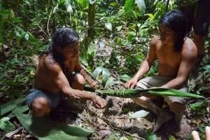 Индейцы готовят кураре
