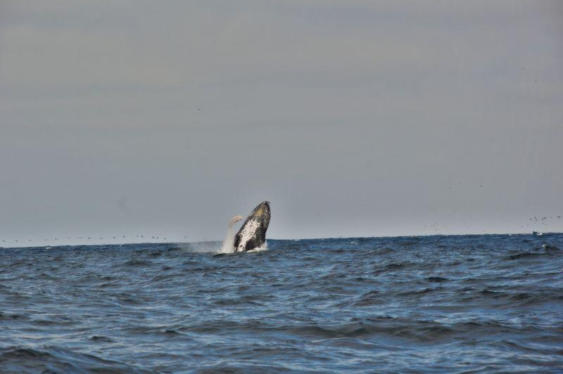 наблюдение за китами в пуэрто Лопес