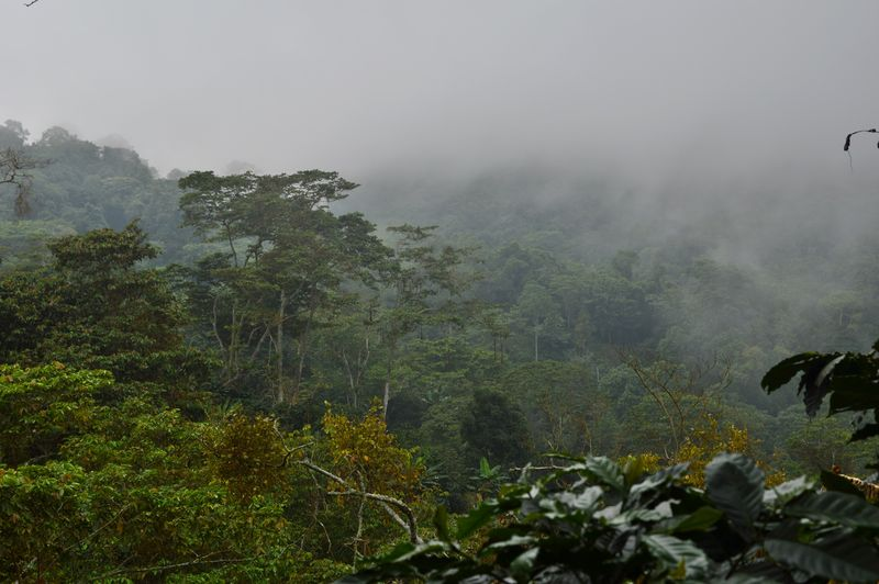 Туман в джунглях - пасмурный день