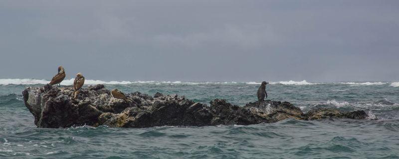 Остров с пингвинами