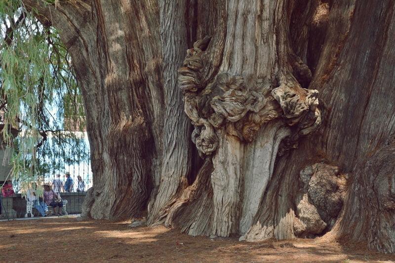 Ствол дереваа