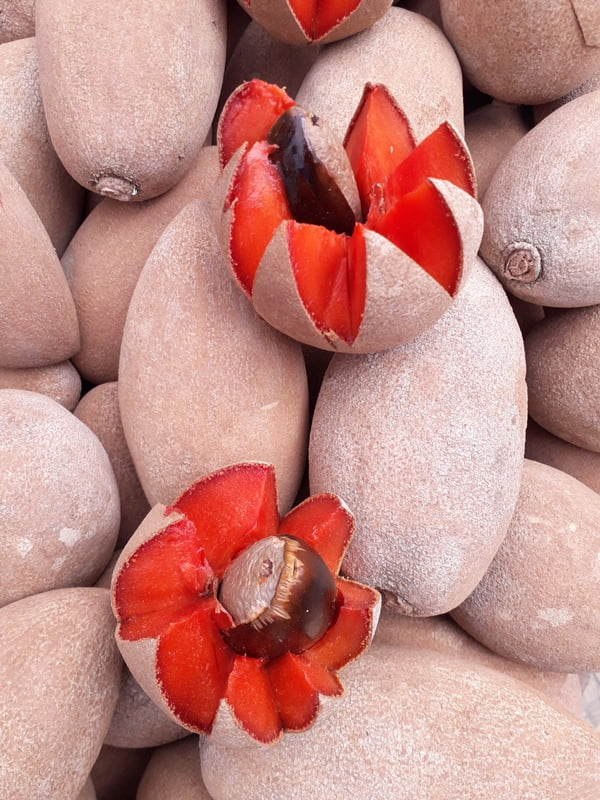 экзотические фрукты в Мексике