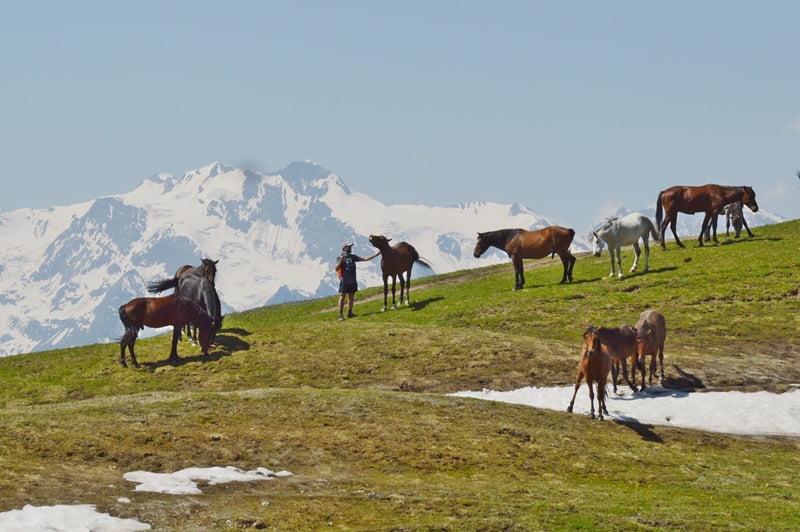Табун лошадей Сванетия
