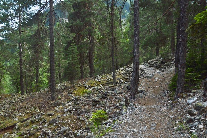 Тропа в лесу на ледник Чалаади