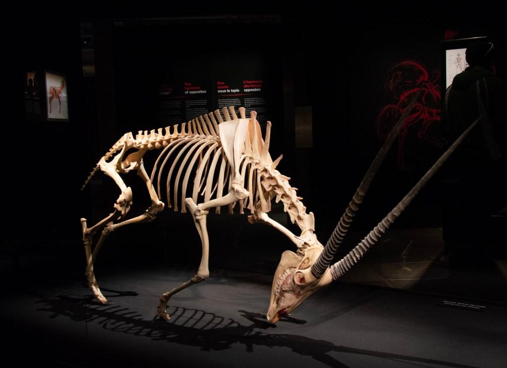 Скелет - выставка Животные наизнанку