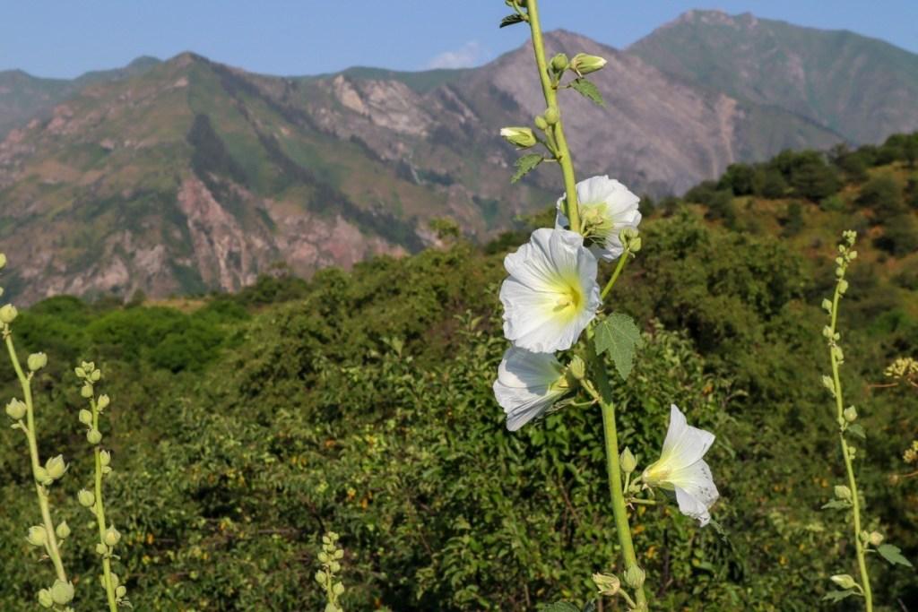 цветы в Сары-Челек