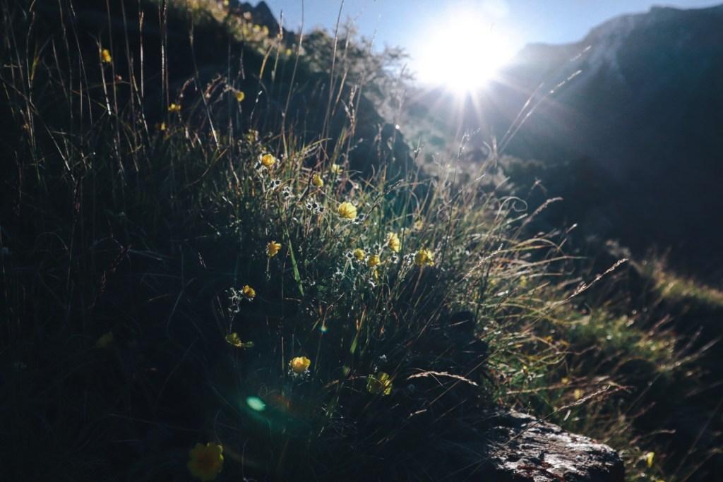желтые цветы в лучах рассветного солнца