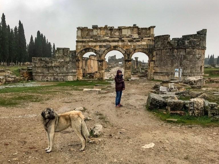 Собака на воне византийский ворот