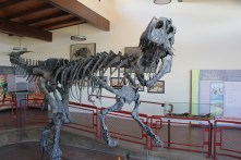 An Allosaurus