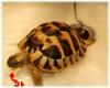turtle_050621