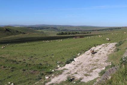 Derbyshire (31)