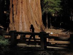 Motorcycling-SequoiaNP