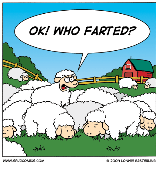2009-02-25-sheep